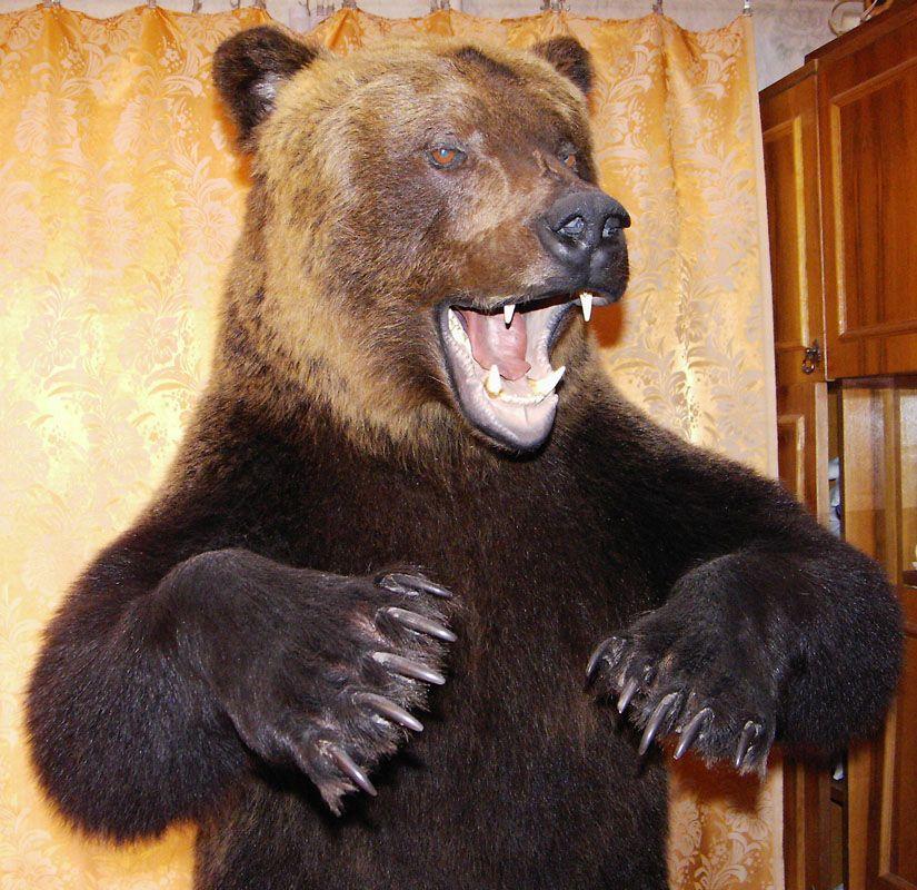 Как сделать чучело медведя своими руками 92