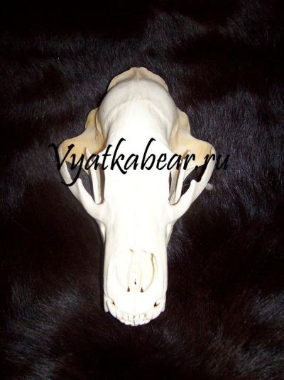 Вятский медведь.РУ - Звериные обереги. Когти и клыки медведя, рыси, волка, лисы, росомахи. Ловцы снов. Струя бобра
